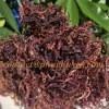 Wholesaler purple sea moss / eucheuma cottonii - 100% natural, wildcrafted
